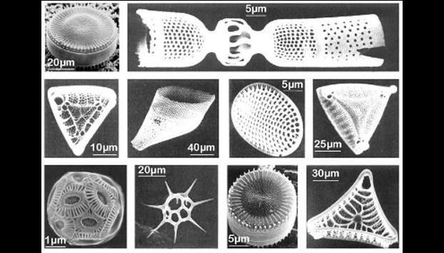 Diatomite structure under the microscope
